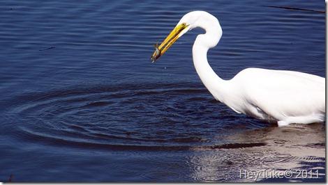 2011-10-21 Huntington Beach SP 002