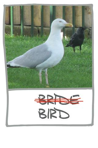 RINDA-BIRD