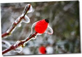 freezing-rain-388933_640
