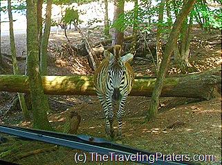 Harmony Safari Park 011