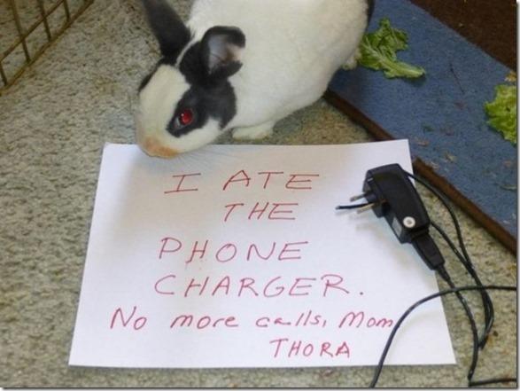 bunny-rabbit-shaming-20