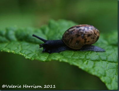 tiny-snail-2