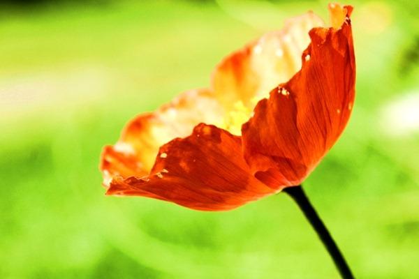 blomst2a