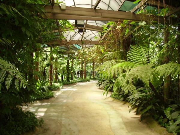 حديقة الاوركيد