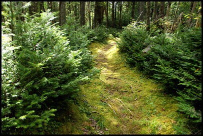 Campobello  3 SW trail loop 080