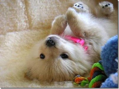 Animal cãoengraçado (1)
