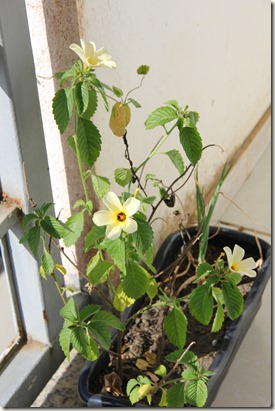 Jardim 25-12-2011 014