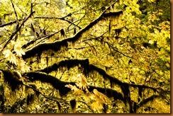 woodland silver falls