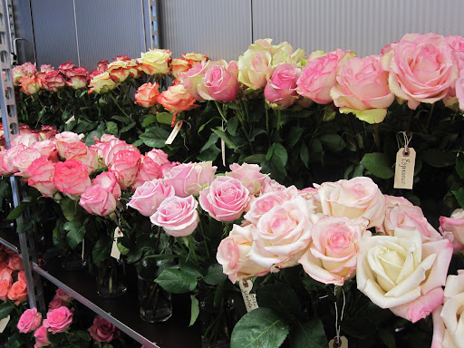 The flowers are usually kept in the store that is cool and kept at about 40 degrees fahrenheit. For the flower show the shop has a warmer temperature, 62 degrees fahrenheit -- which helps the flowers open.