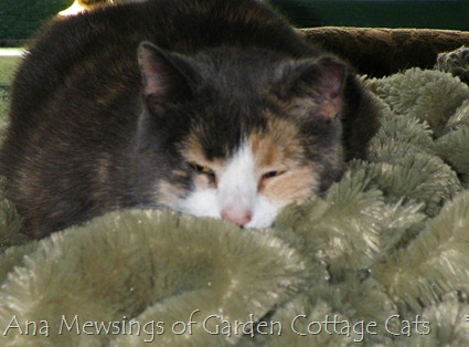 Ana Mewsings of Garden Cottage Cats     © 2012