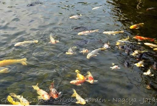 72 - Glória Ishizaka - Shirotori Garden