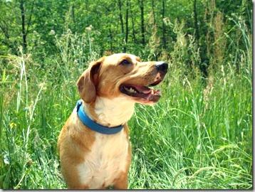 vaccino-leishmaniosi-cane
