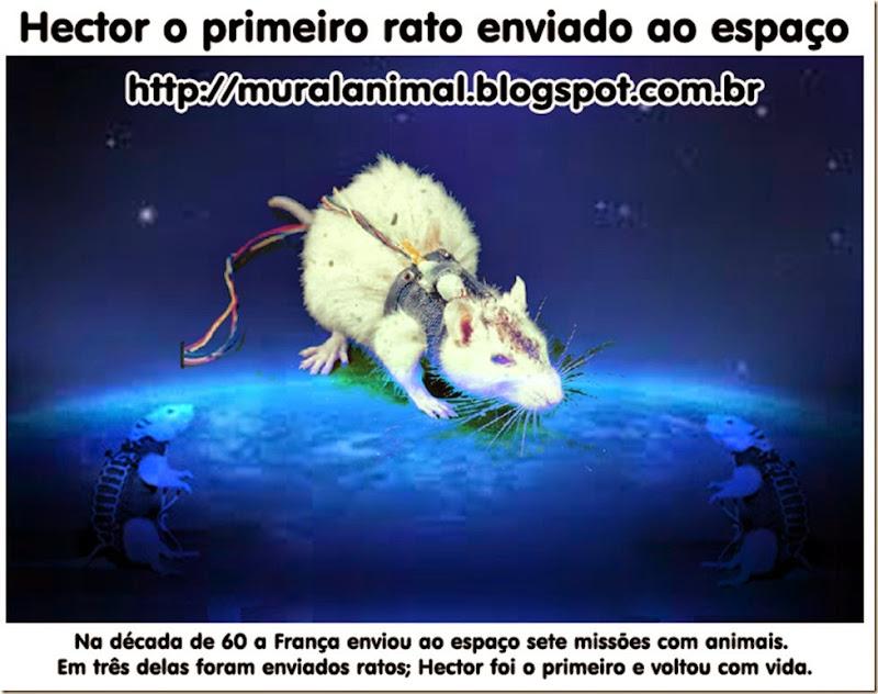 hector-rato-espaco
