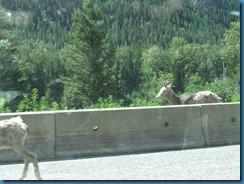 Alaska BC ALB62112 009