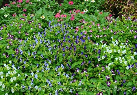 Glória Ishizaka -   Kyoto Botanical Garden 2012 - 103
