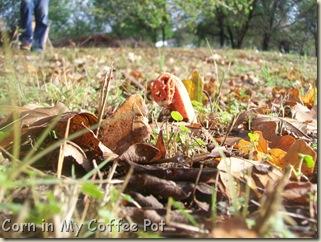 Garden stuff - Nov 2011- Fall mushroom 024