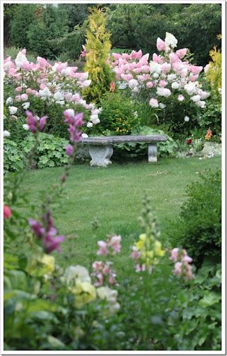 img5320 img5336 - Vanilla Strawberry Hydrangea