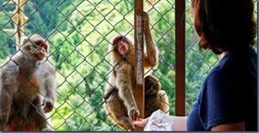 monkey in cage 2