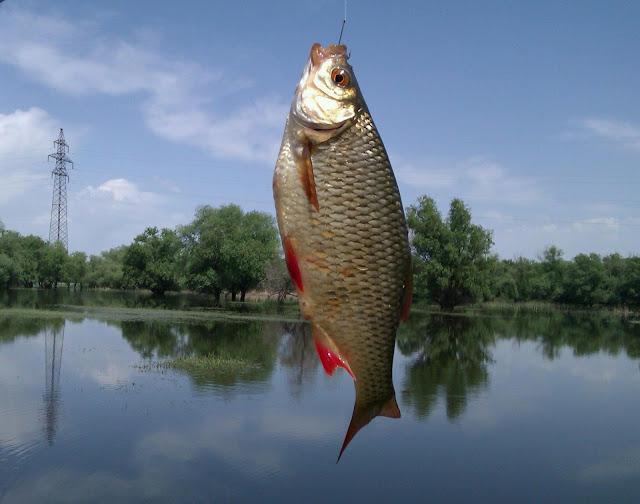 Ловля рыбы в астраханской обл