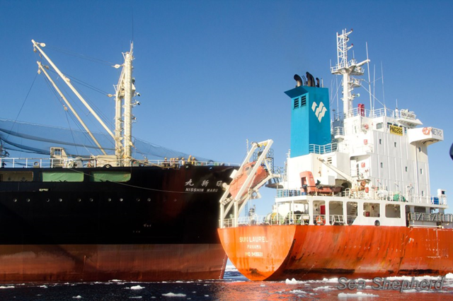 The Japan whale poachers' factory ship, the Nisshin Maru, rams the stern of the tanker ship, the Sun Laurel, 20 February 2013. Photo: Sea Shepherd Conservation Society