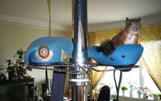 Soldado e esquilo (6)