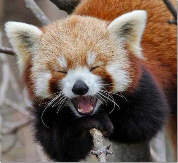 funny-animals-cute-11