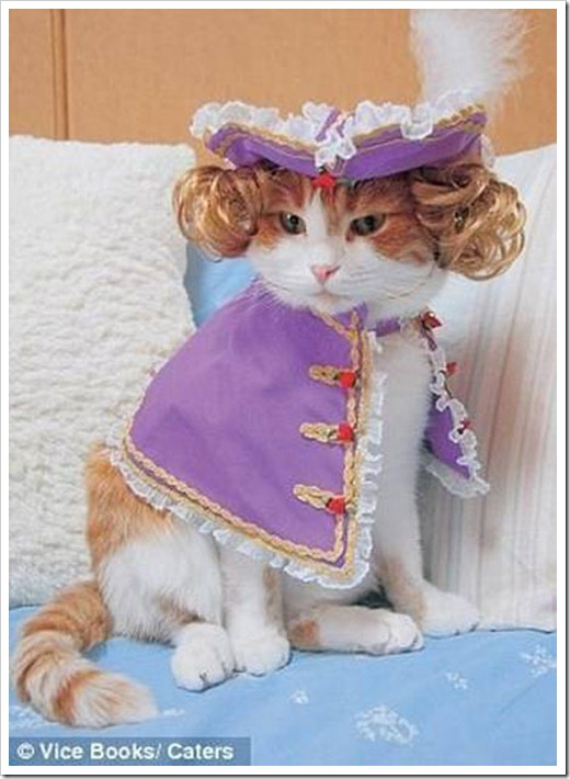 Cat Lord Fauntleroy