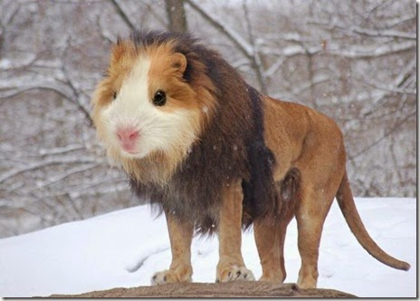 animal-photoshop-023
