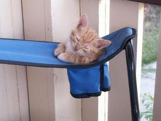 gatos durmiendo (4)