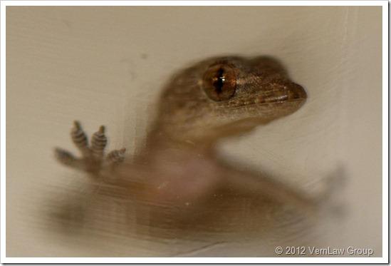 GeckoEmergingIMG_9978