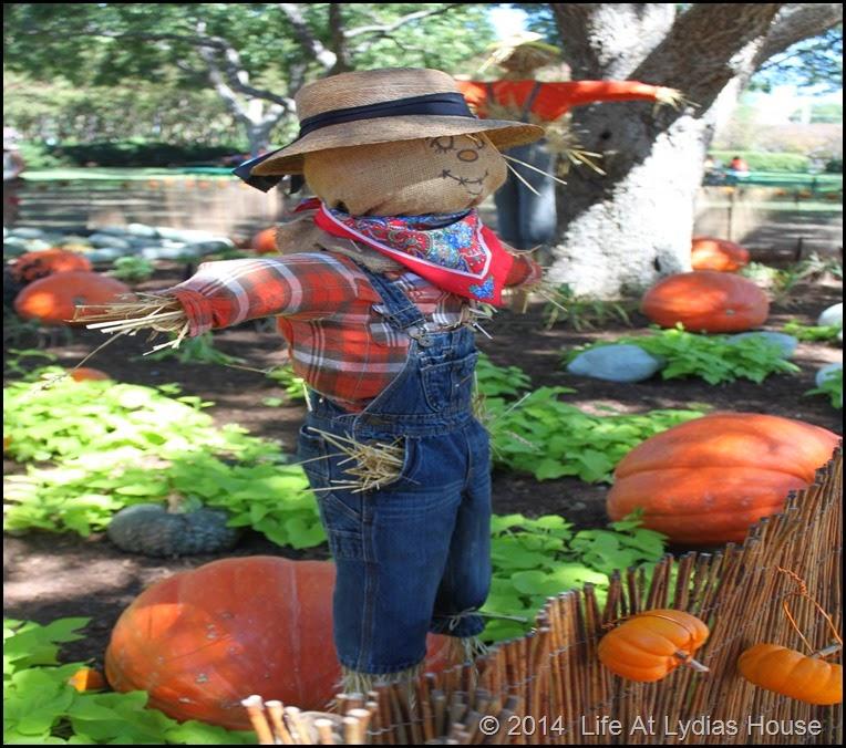 Dallas Arboretum - pumpkin festival-scarecrow garden 2