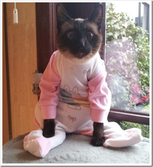 Cat in bunny onesie