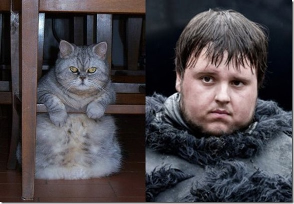cats-game-thrones-12