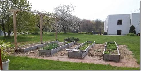 overgrown garden beds