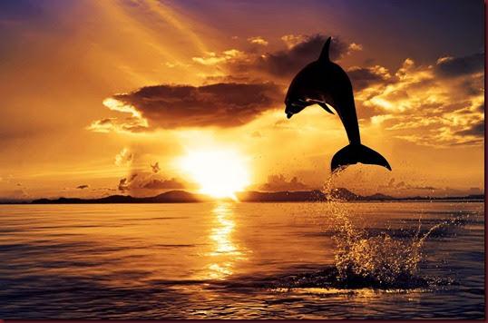 Dolphin-Sunset-HD-Wallpaper