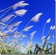 semilir angin