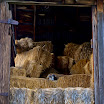 Cats In Hay Loft.jpg