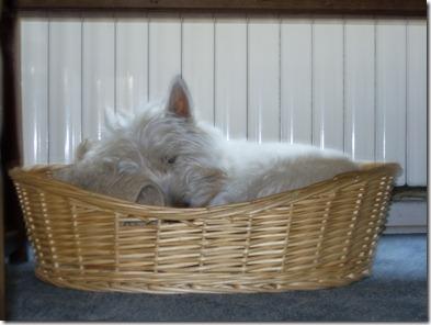 2009_06 Max schläft im Körbchen