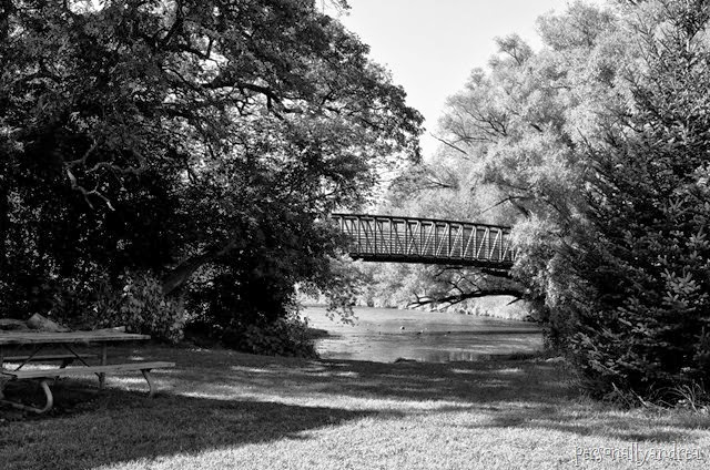 meadowvale black and white_007
