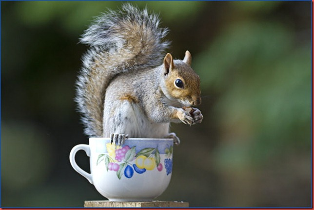 Grey squirrel perched on teacup