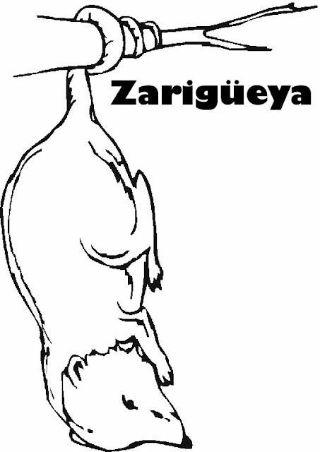 DIBUJOS DE ZARIGÜEYAS PARA COLOREAR