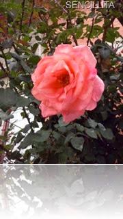 AGUA DE ROSAS Y FOTOS SUPER 039
