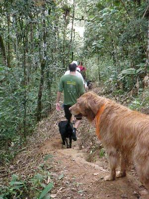 Dogs Trekking 4 (135)