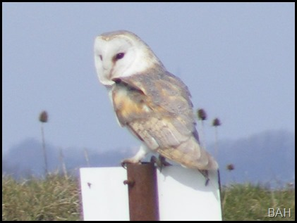 a photo Owl