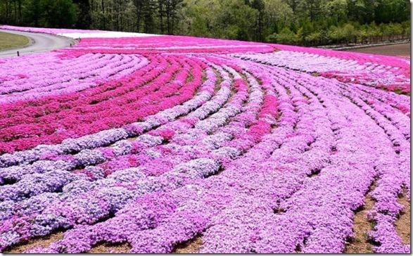 pink-park-japan-17