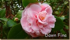 Sandhill Horticultural Garden_036