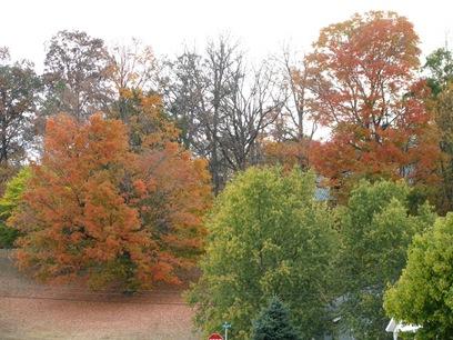 Oct 12 2010 004