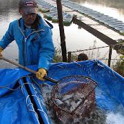 20121120e_2012度第2回三島湖へら鮒放流002.jpg