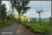 AVV_075__DSC0259-Edit_www.keralapix.com_075