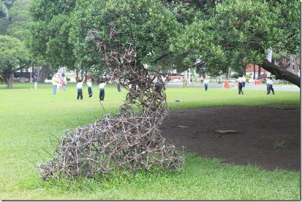 台南-成大裝置藝術。這是什麼?像是草編織連接在榕樹與草地之間,像是在保護某種東西,又像是某個童軍的產物。